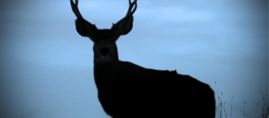 The Deer We Almost Ate