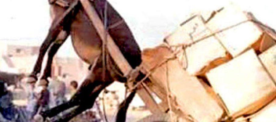 donkey pulling cart name the caption juanofwords